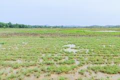 Rice field before seeding season Royalty Free Stock Image