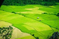 Rice field and shacks Royalty Free Stock Image