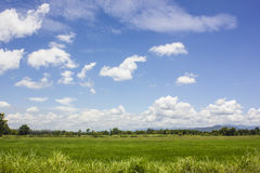 Rice field with sky view Stock Images
