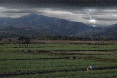 Rice field with small hut when heavy raining day at countryside Royalty Free Stock Images