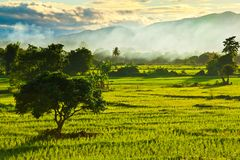 Rice field with smoke Royalty Free Stock Photo