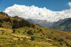 Rice field and snowy Himalayas mountain in Nepal Stock Photos