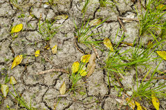 Rice field soil texture Stock Photos