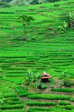 Rice Field on the steep hill Stock Photography