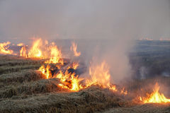 Rice field stubble on fire Royalty Free Stock Photo