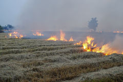 Rice field stubble on fire Stock Photos