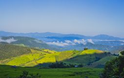Rice field with sun shining Royalty Free Stock Photo