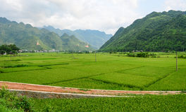 Rice field at the sunny day in Hoa Binh, Vietnam Stock Image