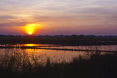 Rice field with sunset Stock Photo