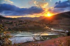 Rice field sunset Stock Photo