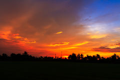 Rice field in sunset Royalty Free Stock Photography