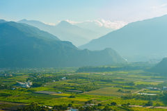 Rice field in Taitung, Taiwan Royalty Free Stock Photos