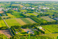 Rice field in Taitung, Taiwan Stock Images
