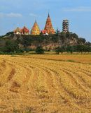 Rice field. With temple Royalty Free Stock Image