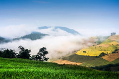 Rice field terrace blue sky Royalty Free Stock Image