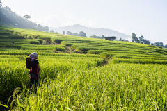 Rice field terrace blue sky Royalty Free Stock Images