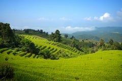 Rice field terrace blue sky Royalty Free Stock Photo