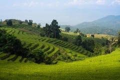 Rice field terrace blue sky Royalty Free Stock Photography