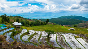 Rice field terrace in Chiangmai Thailand stock images