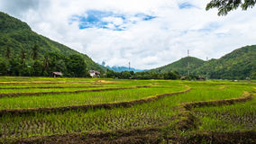 Rice field terrace in Thailand royalty free stock photos