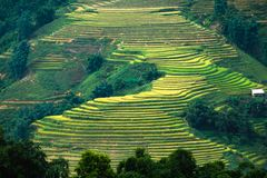 Rice field terraced glowing light on mountain royalty free stock image