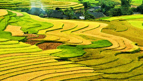 Rice field on terraced in mountain. Royalty Free Stock Image