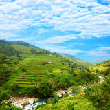Rice Field Terraces Royalty Free Stock Image