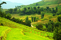 Rice Field Terraces Royalty Free Stock Photos