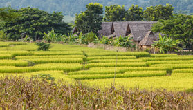 Rice field terraces Stock Photo