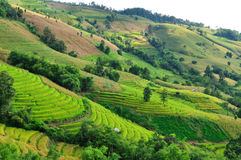 Rice field terraces in Chiangmai Thailand. Royalty Free Stock Image