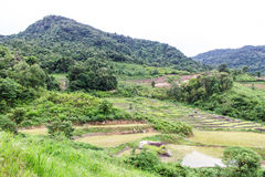 Rice field terraces in doi inthanon, Ban Mae Klang Luang Chiangmai Royalty Free Stock Images