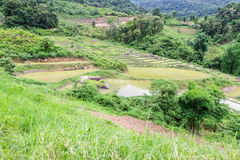 Rice field terraces in doi inthanon, Ban Mae Klang Luang Chiangmai Royalty Free Stock Photos