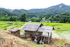 Rice field terraces in doi inthanon, Ban Mae Klang Luang Chiangmai Stock Photography