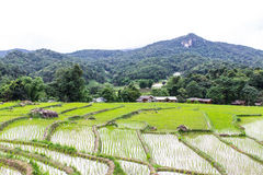 Rice field terraces in doi inthanon, Ban Mae Klang Luang Chiangmai Royalty Free Stock Photography