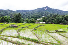 Rice field terraces in doi inthanon, Ban Mae Klang Luang Chiangmai Royalty Free Stock Image