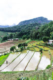 Rice field terraces in doi inthanon, Ban Pha Mon Chiangmai Thailand Stock Images