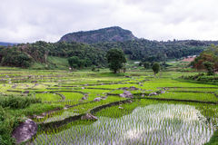 Rice field terraces in doi inthanon, Ban Pha Mon Chiangmai Thailand Royalty Free Stock Photo