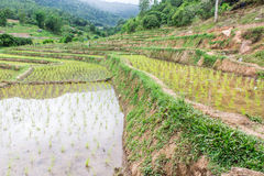 Rice field terraces in doi inthanon, Ban Sob Aeb Chiangmai Thai. Land stock image