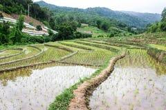 Rice field terraces in doi inthanon, Ban Sob Aeb Chiangmai Thai. Land royalty free stock photography