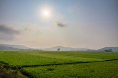 Rice field terraces Royalty Free Stock Photos