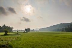 Rice field terraces Stock Photo