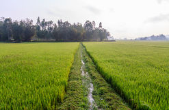 Rice field terraces Royalty Free Stock Photography