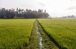 Rice field terraces Stock Image