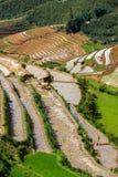Rice field terraces. Near Sapa, Vietnam Royalty Free Stock Photo