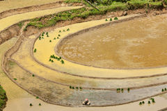 Rice field terraces. Near Sapa, Vietnam Royalty Free Stock Photos