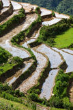 Rice field terraces. Near Sapa, Vietnam Royalty Free Stock Photography