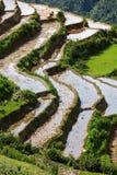 Rice field terraces. Near Sapa, Vietnam Royalty Free Stock Photography