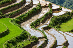 Rice field terraces. Near Sapa, Vietnam Royalty Free Stock Images