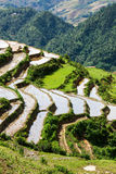 Rice field terraces. Near Sapa, Vietnam Royalty Free Stock Photo