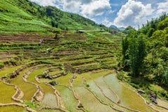 Rice field terraces. Near Sapa, Vietnam Royalty Free Stock Images